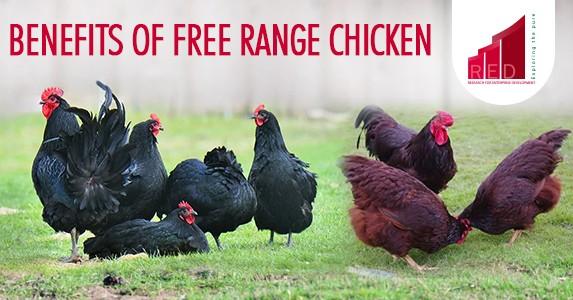 benefits of free range chicken