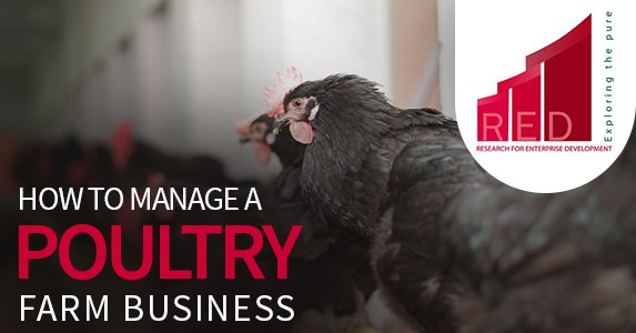 how to manage poultry farm