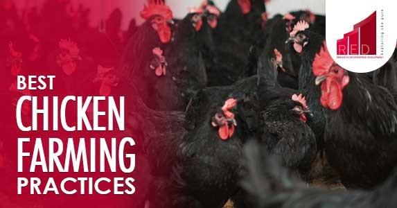 best chicken farming practices