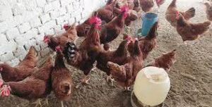 rir-farming-in-pakistan