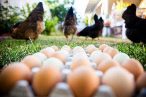 free range | desi eggs | pastured raised eggs